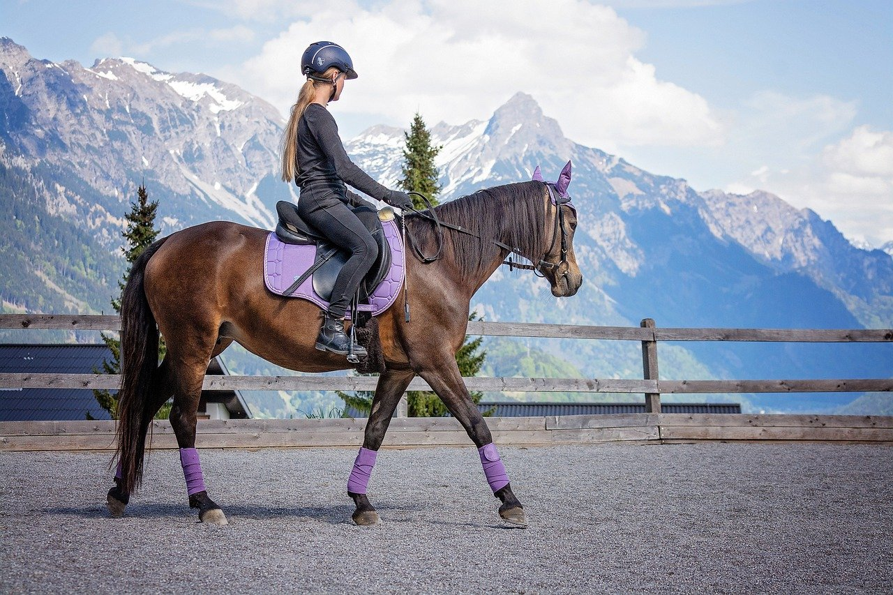horse, girl, riding lessons